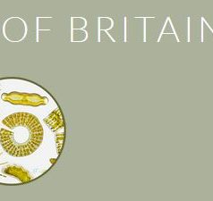 Diatom Flora of Britain and Ireland
