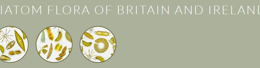 Diatom Flora of Britain and Ireland