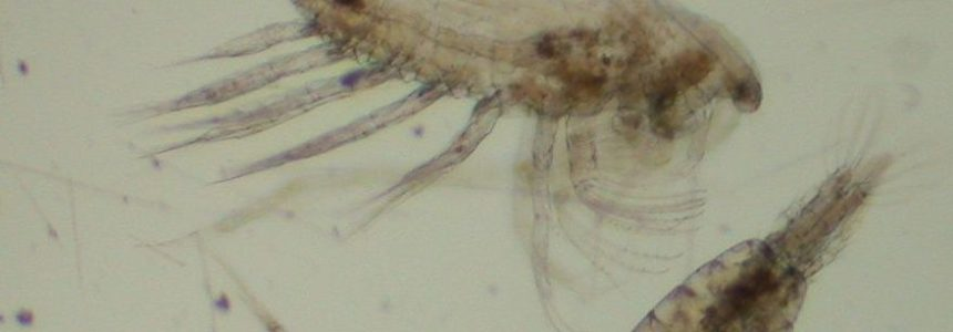 Training course on zooplankton identification