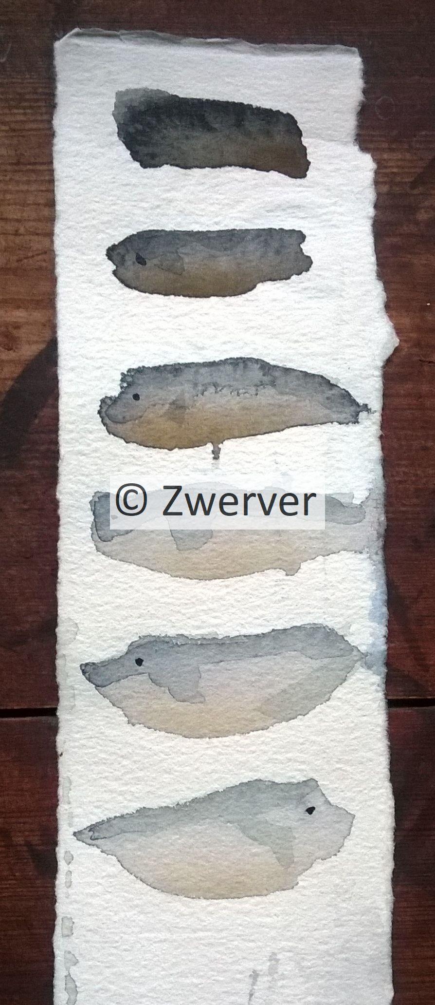 Kalat - Fishes